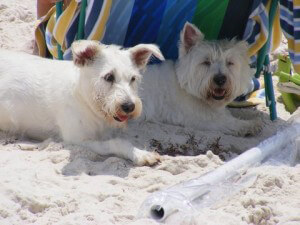 Gulf Shores Dog friendly beaches